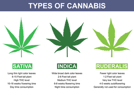 indica: Types of Cannabis. Info-graphic design