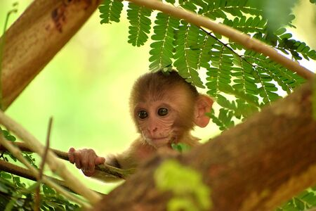a baby monkey is searching for her mother in the jungle