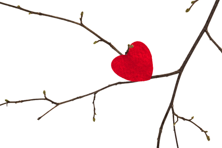 Valentine heart lies on a tree branch, isolated