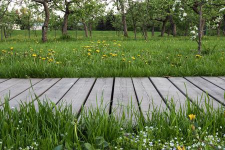 Empty wooden walkway in the green garden. Mock up space for garden tools. Imagens