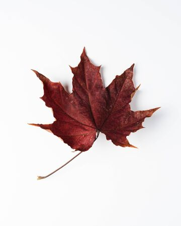 Colorful autumn leaves. Dry maple leaves on a white background. Imagens