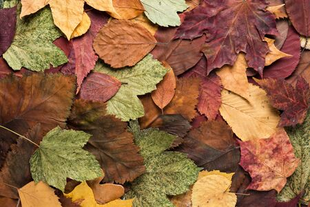Background from dry autumn colorful leaves Imagens