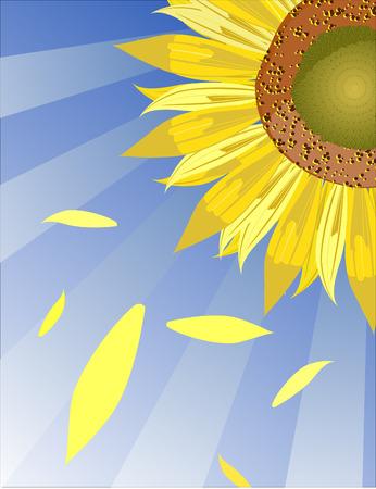 Vector sunflower background macro illustration.