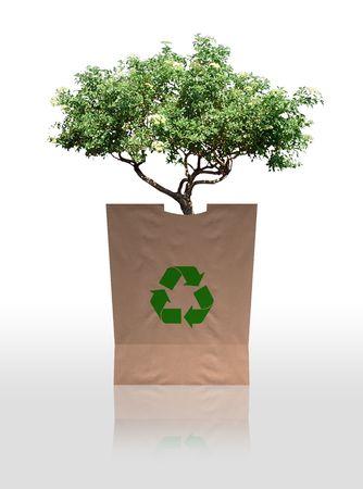 Reforestation Stock Photo - 3220721