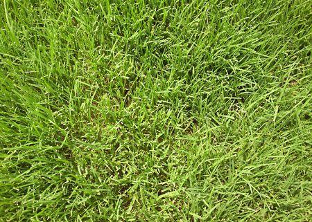 Close-up of green grass blades.