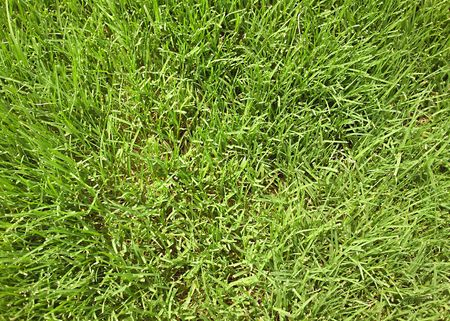 cut grass: Close-up of green grass blades.