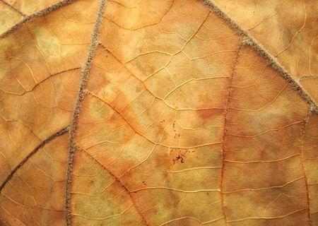autmn: Close-up of an old, autmn leaf.