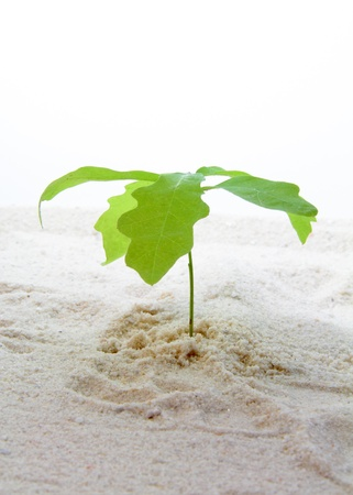 Twig with green leaves growing in sand  Imagens