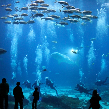 Photo of fish, a whale shark, and divers with people looking in, at the Aquarium
