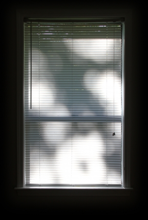 Window blinds with tree shadows reflected.