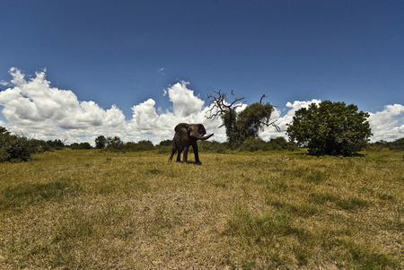 safari game drive: Elephant in landscape