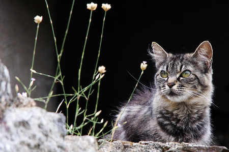 domestication: Young cat on a stone wall