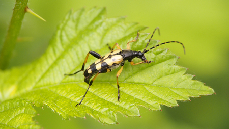 Insect on a leaf of a thorn bush Stock Photo