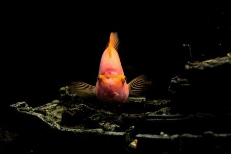 parrot fish     photo