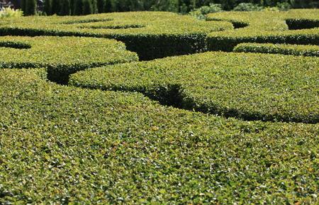 regular: astratto sfondo verde regolare giardino Archivio Fotografico