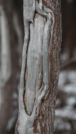 scarring: Tronco d'albero di pino astratto