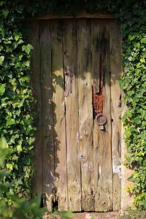 Wooden door overgrown with ivy photo
