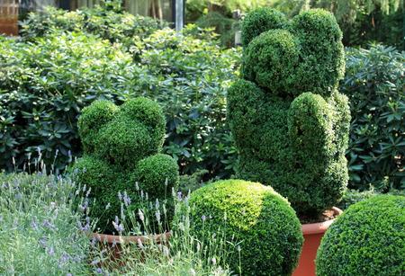 topiary: green bear in topiary garden