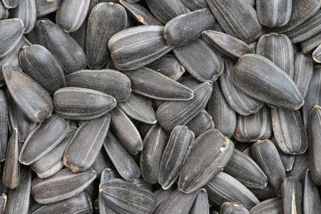 semillas de girasol: semillas de girasol de fondo macro Foto de archivo