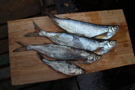 roach: Four freshly caught fish sabrefish and roach