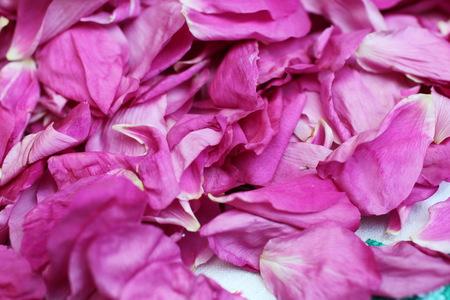 petals red rose Stock Photo