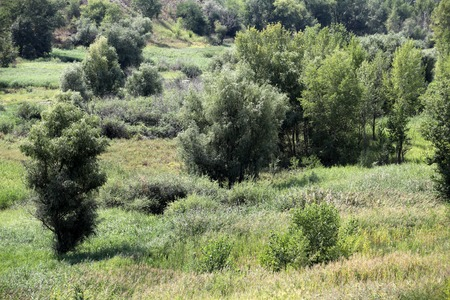inconspicuous: tree and wild grasses in hilly scenic landscape