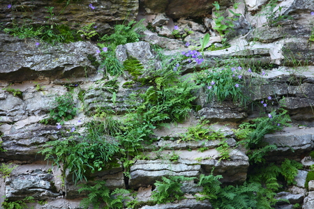 viable: Amazing viable plants grow on rocks Stock Photo
