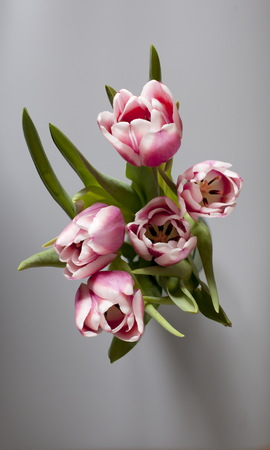 Bouquet  tulips on table gray background overhead shot