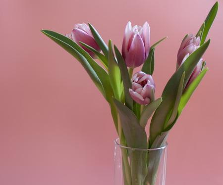 Festive bouquet tulip, glass vase, pink background Stock Photo