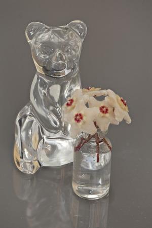 bear Crystal figurine and  bouquet  Hoya flowers in vase