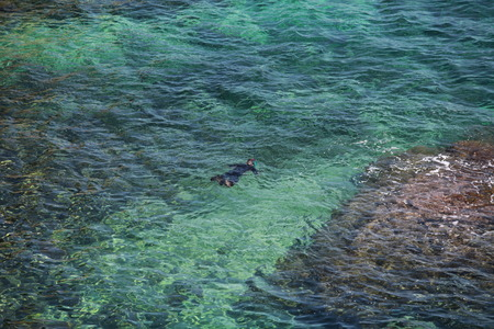 snorkelling  swimmer In diving-suit, open sea view from above