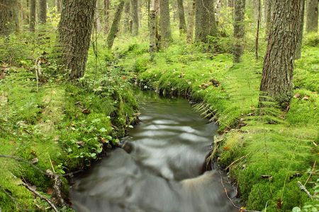 amazing forest  brook  flows among the mighty trees beautiful landscape wildlife, long exposure