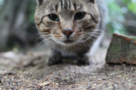 striped tabby cat with green eyes looking close to Standard-Bild