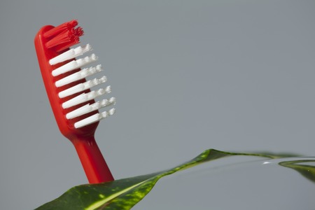 red toothbrush and green leaf concept of cleanliness. Copy space Standard-Bild