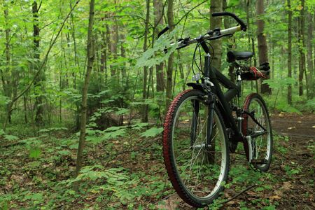 mountain bike in the foreground in a forest, without people