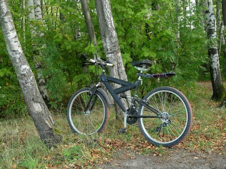 mountain bike by the tree in the forest, without people