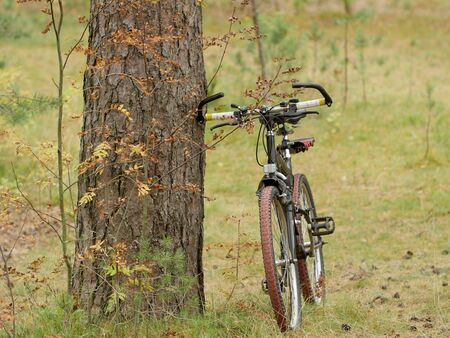 bicycle travel, yellow autumn, bike in the foreground Reklamní fotografie