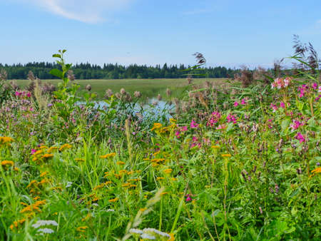 herbs flowering meadow summer landscape with a lake Stock fotó