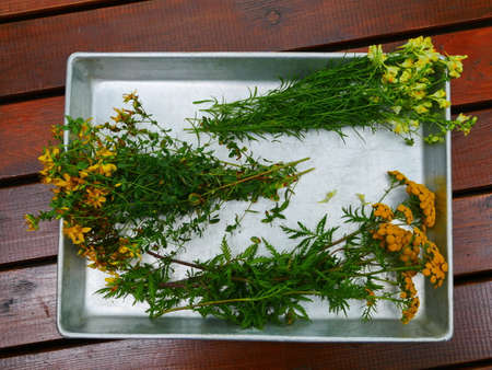 small bouquets of medicinal herbs on a tray of tansy, St. John's wort, toadflax, still life