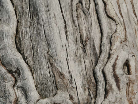 wood dry cracked surface, abstract background