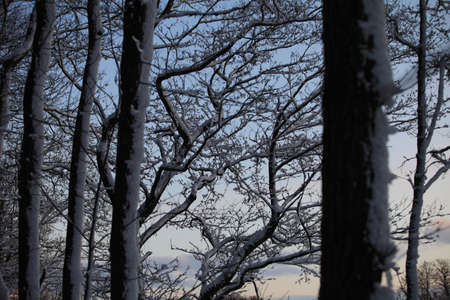 white trees covered with snow on the background of the sky winter landscape