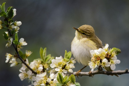 Cute bird sitting on a blossoming branch.