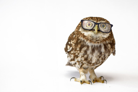 Little Owl wearing glasses, (Athene noctua) standing on a white background. 写真素材 - 95176783