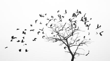 Las aves vuelan desde el árbol como las hojas por el viento. Foto de archivo