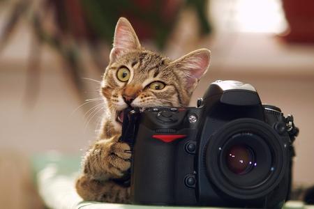Funny cat with a camera. Banco de Imagens