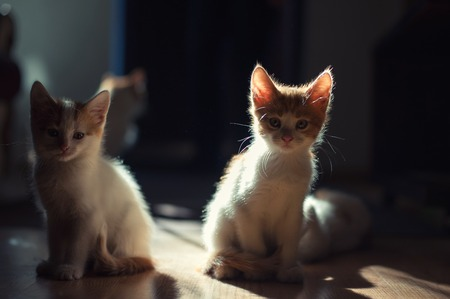 Two Cute young baby red kitten on a beautiful light Stockfoto