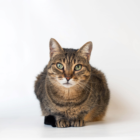 adorable cat on white background.