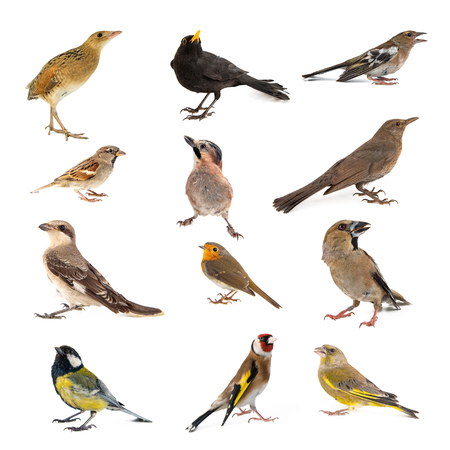 Set of photographs of birds isolated on white background. Standard-Bild