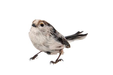 Long-tailed tit, Aegithalos caudatus, isolated on white background. Standard-Bild - 121702730