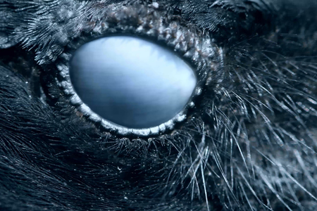 Raven eye close-up, macro, eye of hooded crow. toned Standard-Bild - 123897824